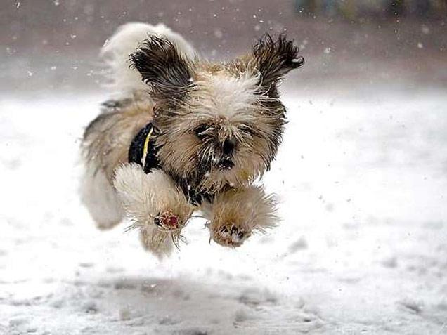 Best Wet Dog Food For Beagles