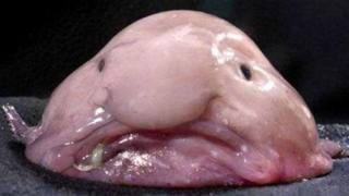 blobfish_0