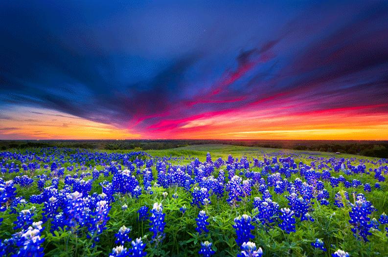 Texas-Wildflower-Report-2019-793x526