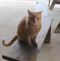 Leroy the Barn Cat