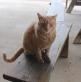 Leroy the Barn Cat
