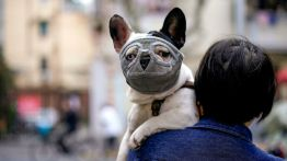 Dog wearing a mask is seen on a street following an outbreak of the novel coronavirus disease (COVID-19), in Shanghai
